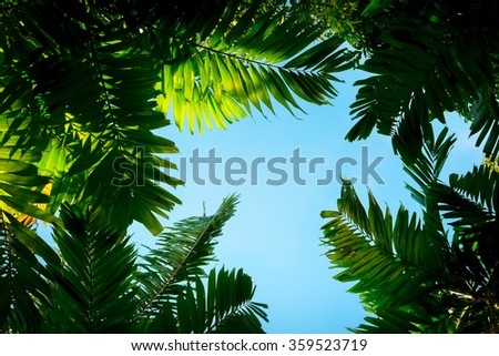 Palm leaves on sky background - stock photo