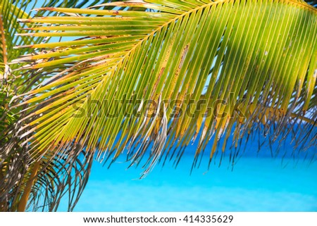 Palm leaves on tropical beach with blue sea - stock photo