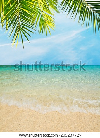 palm leaves over a golden shore