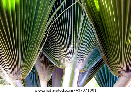 Palm leaves pattern                                - stock photo