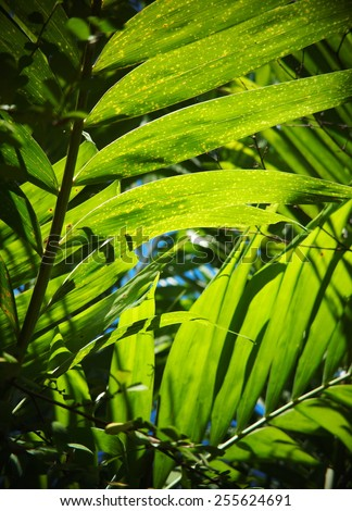 palm leaves pattern with hi-light shades and shadows under natural sun light close up of colorful palm leaves on a sunny day outdoor - stock photo