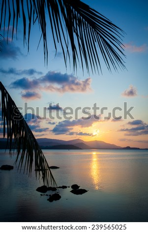 Palm leaves silhouette over sunset on Koh Samui. Thailand - stock photo