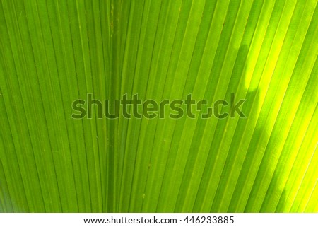 Palm leaves texture background,Blur:Close up,select focus with shallow depth of field:ideal use for background.