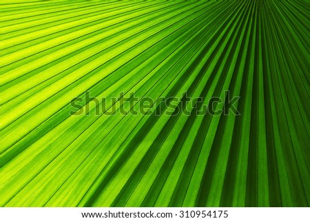 Palm leaves texture with shadow