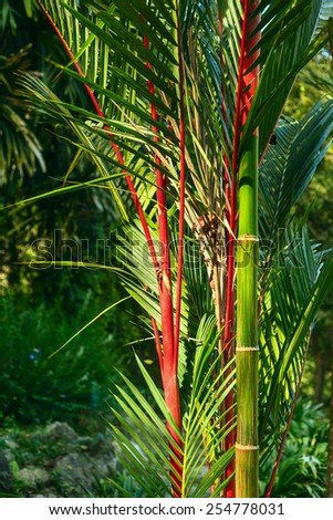 Palm leaves with bamboo in the exotic garden - stock photo