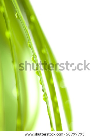 Palm Leaves with Water Drops and space for text - stock photo