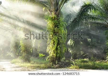 Palm Light Day Outdoor Fog Farm - stock photo