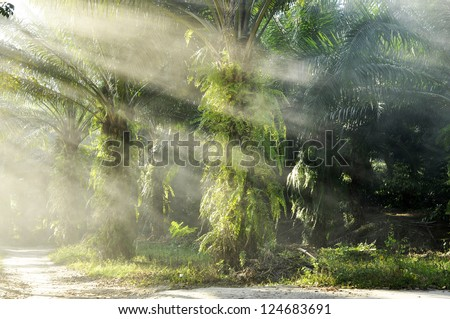 Palm Light Farm Day Outdoor Fog - stock photo
