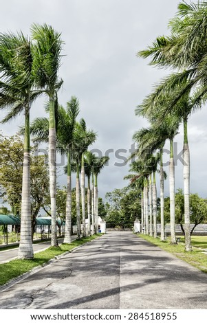 Palm lined driveway with fence and park benches