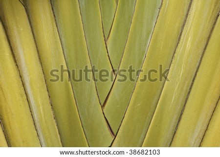 Palm macro horizontal - stock photo
