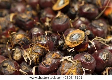 Palm oil fruit.