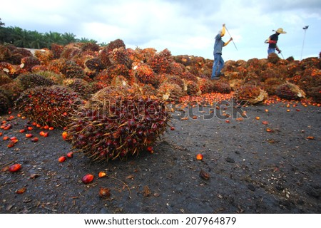 Palm Oil Industry - stock photo