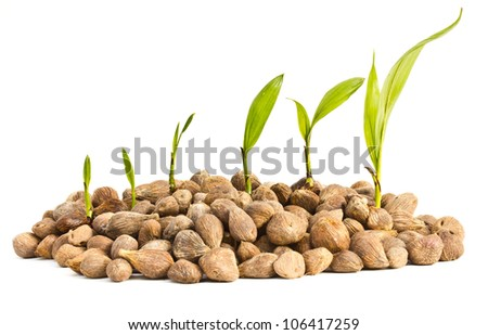 Palm oil seeds and seedlings on a white background. - stock photo