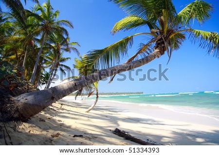 Palm on caribbean beach with white sand,Punta Cana - stock photo