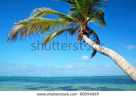 Palm on caribbean sea beach, Dominican Republic