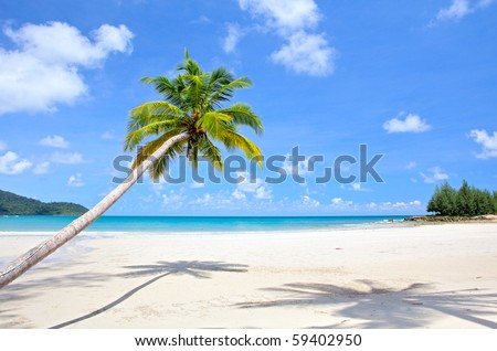 Palm on the beach - stock photo