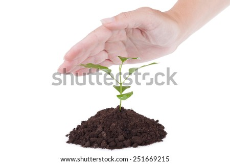 Palm over a small green plant, a white background - stock photo