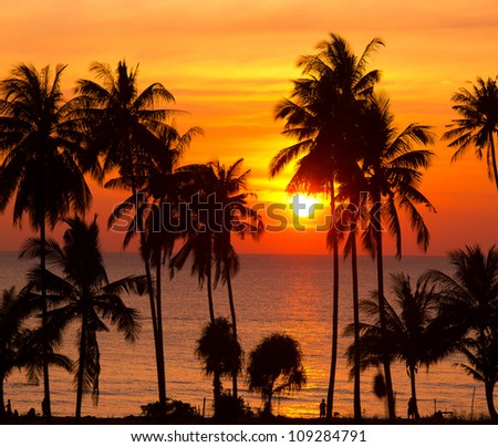 Palm Paradise Night is Coming - stock photo