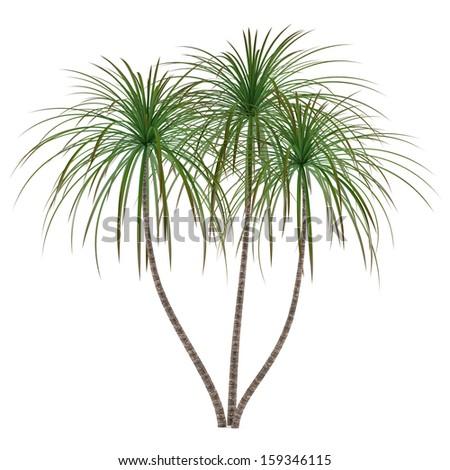Palm plant tree - stock photo