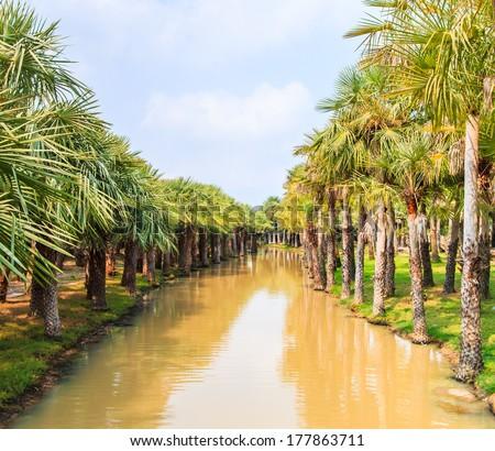Palm Plantation  - stock photo