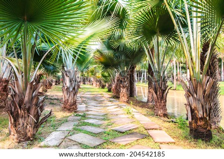 Palm Plantation and way in plantation