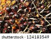 Palm Seed Plat Cluster Fruit - stock photo