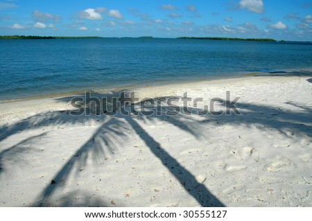 Palm Shadow on sand - stock photo
