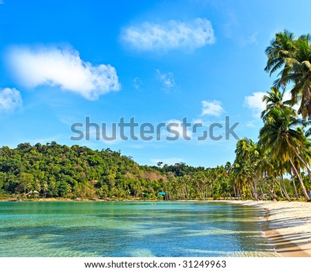 Palm shadow on the water - stock photo