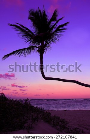 Palm silhouette on the beach during sunset - stock photo