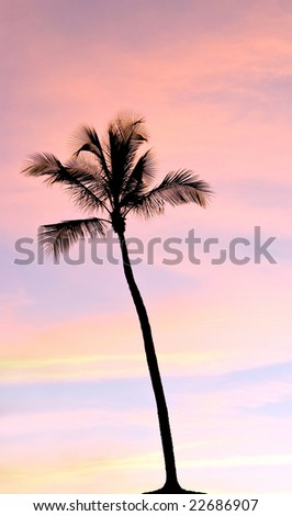 Palm silhouette on the sunset with warmly clouds