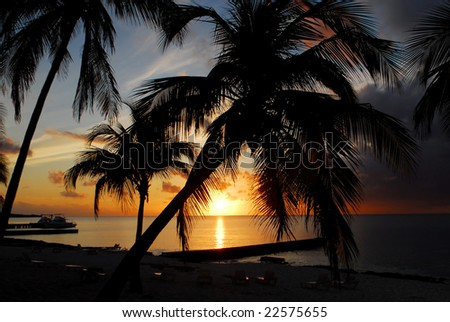 Palm silhouettes at Maria la Gorda beach on Cuba - stock photo