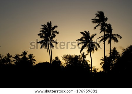 Palm Silhouettes in Sunset Sky / Palm Trees Silhouette at Sunset, Tanzania, Africa - stock photo