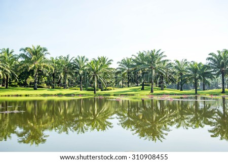 Palm Springs at park with pond - stock photo