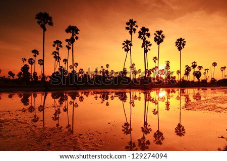 Palm sunset water reflection.