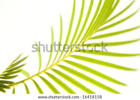 palm texture / background - stock photo