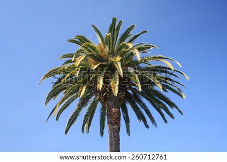 Palm tree against a bright blue sky, California. - stock photo