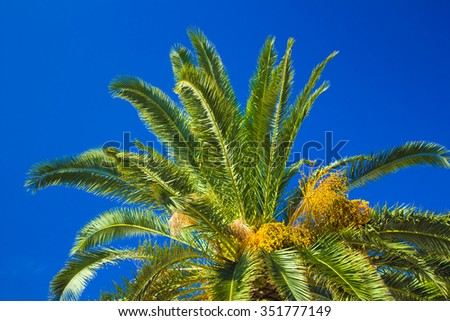 Palm tree against a brilliant clear blue sky