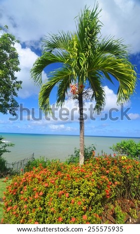 Palm tree against blue sky - stock photo