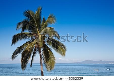 Palm tree against blue sky and Banderas Bay, Puerto Vallarta, Mexico - stock photo