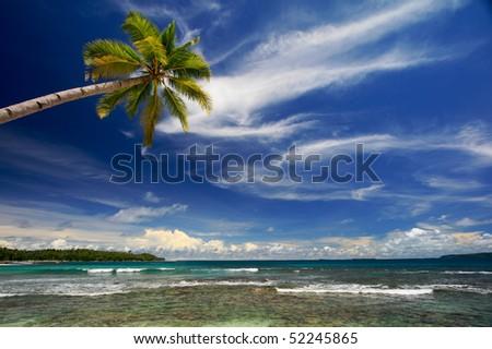 Palm tree against blue sky and sea on island beach - stock photo