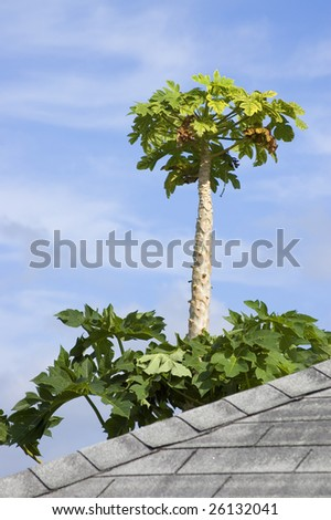 palm tree against light blue sky