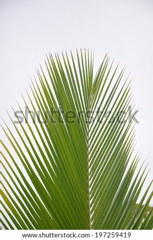 palm tree against tropical sky  - stock photo