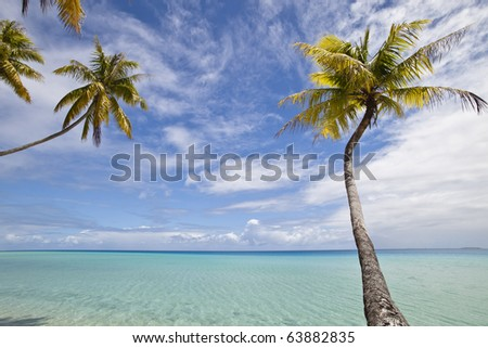 Palm tree alone on blue lagoon of paradise island