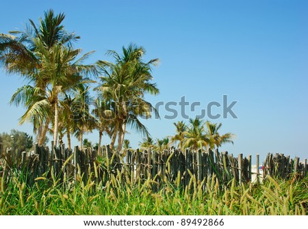 palm tree and an old wicker fence on the background of blue sky - stock photo