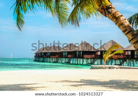 Palm Tree And Exotic Houses In The Maldives