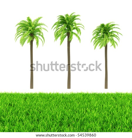 Palm tree and green grass isolated on white background - stock photo