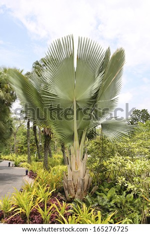 Palm tree and landscaping. - stock photo