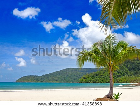 Palm tree and palm branch on the tropical beach, tropical nature, sea water, good place for holiday