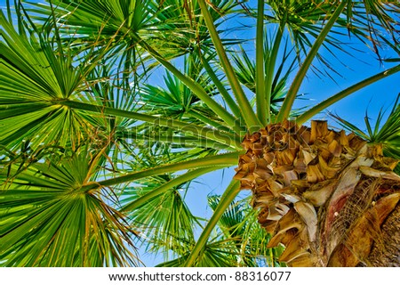 Palm Tree and the blue Sky view from below