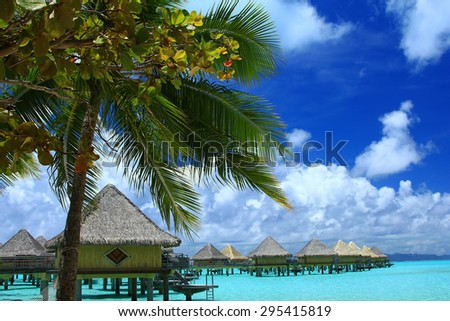 Palm tree and water bungalows in Bora Bora